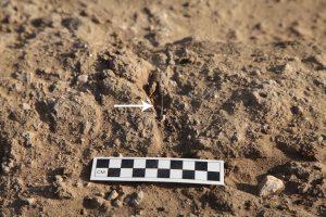 Needle in mortar between two mud bricks