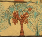 A dom palm in the Ramesside tomb of Sennedjem